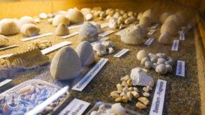Fossilien im Freizeitpark Tolk-Schau