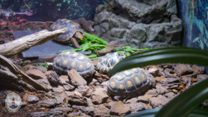 Schildkröten im Freizeitpark Tolk-Schau
